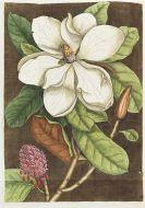 Mark Catesby - Piscium serpentum insectorum