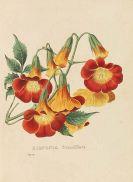 Heinrich Gottlieb Ludwig Reichenbach - Flora Exotica